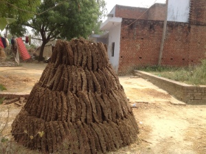 Cow dung cakes in front of every home